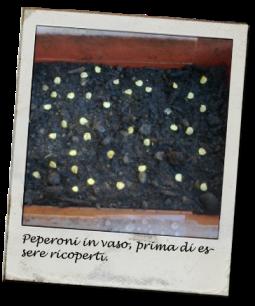 peperoni1