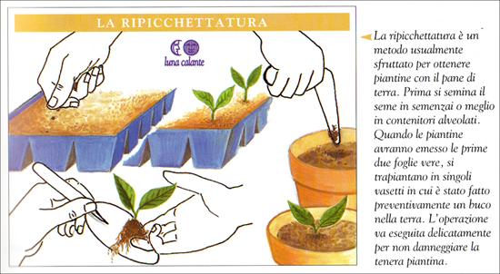 La ripicchettatura (fonte: Nuovo Calendario Lunare delle semine e dei lavori)