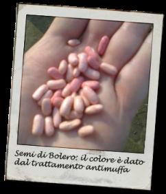 semi_fagiolini