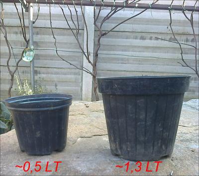 Vasi da semenzaio; quello più a sinistra è il primo da usare.