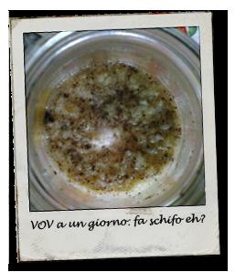 vov_sopra