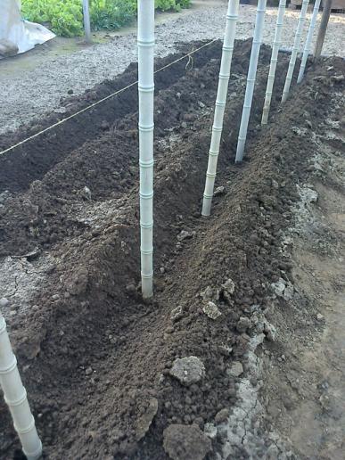 Picchetti di plastica posizionati in via preliminare all'impianto di una proda di pomodori.